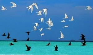 uccelli_bianchi_neri