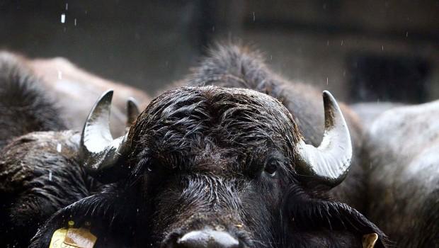 """Occhio alle """"bufale"""": sì, ma a quelle del sistema!"""