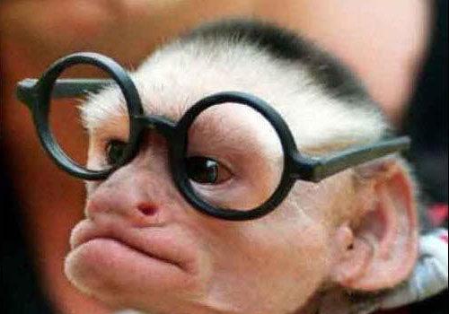 Scimmie istruite
